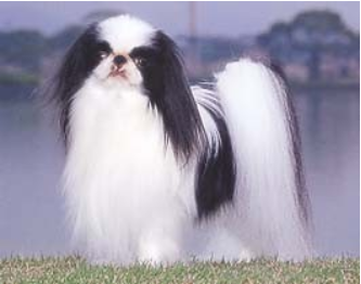 ブルドックがイギリスの国犬ならば、日本の国犬は?【ロイヤル・ドルトン製『Jack』@ヤフオク】